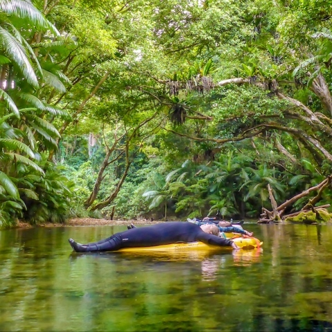 Half day river drift tour on the Mossman River