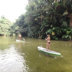 Half Day Stand Up Paddle Board Rainforest River Tour