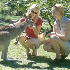 Hand Feed A Kangaroo At Rainforestation | 2 Day Combo Great Barrier Reef & Rainforestation In Kuranda Tropical North Queensland