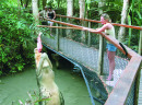 More information aboutKuranda | Skyrail | Kuranda Train | Hartley's Crocodile Park | Combo Package Tour | VKHC