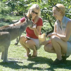 Hand Feed Kangoroos & Wallabies | Rainforestation | 1 Day Tour | From Cairns