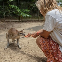 Hand feed wallabies on Daintree Rainforest tour