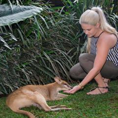 Hand Feeding Kangaroo | Tropical North Queensland | Rainforestation