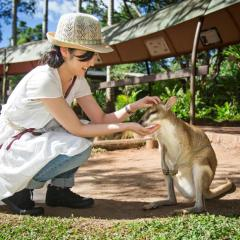 Hand Feeding Wallabies At Rainforestation Nature Park