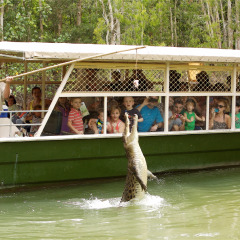 Hartley's Crocodile Adventures | Wetlands Cruise