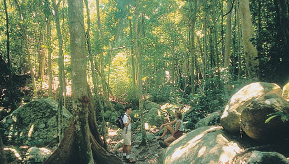 Hike into the rainforest trails to the secret garden on Fitzroy Island on the Great Barrier Reef