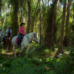 Horse back riding in Cairns