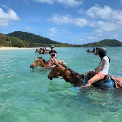 Horse Rides on the Beach - Cape Tribulation Beach Far North Queensland