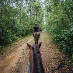 Horse Riding on the Beach at Cape Tribulation and in the Rainforest