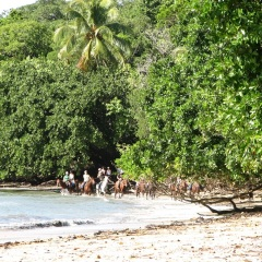 Horse Riding on the Beach at Cape Tribulation