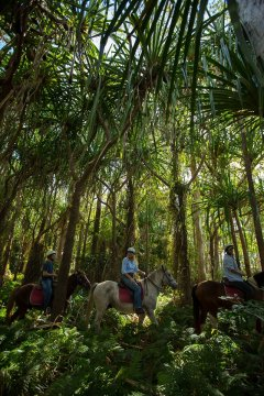 Horse Riding Tours Cairns