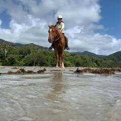 Horseback Riding on the Beach - Cape Tribulation