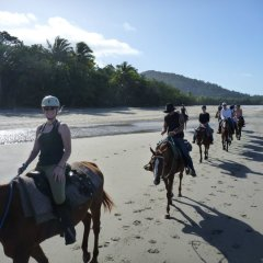 Horses Walking in a Line on the Beach Cape Tribulation