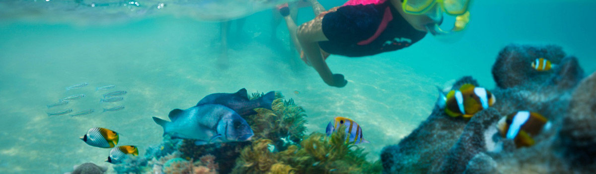 Cairns 1 Day Package Tours | Hot Air balloon ride in the morning then snorkelling and diving the Great Barrier Reef in the afternoon