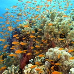 Huge varieties of fish species on the Great Barrier Reef in Australia