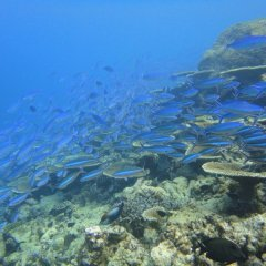 Huge varieties of marine life on the Great Barrier Reef