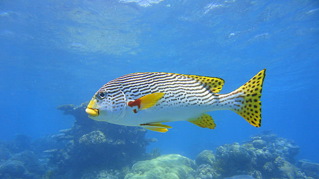 Great barrier reef tours cairns best value new reef tour - Best place to dive the great barrier reef ...