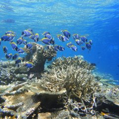 Huge variety of marine life on the Great Barrier Reef