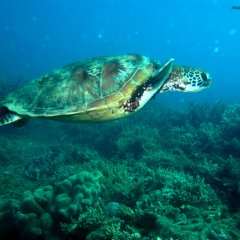 If swimming with Turtles is your thing then Frankland Islands is the Tour to book