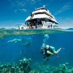 Grear Barrier Reef Gold Class | Introductory And Certified Diving | Cairns North Queensland