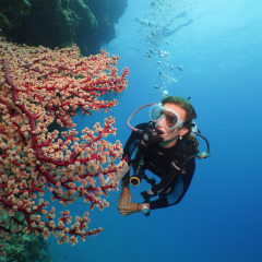 Introductory & Certified diving on the Great Barrier Reef off Port Douglas