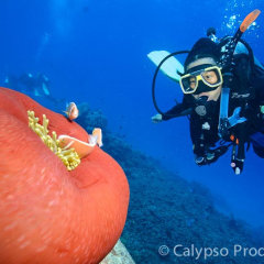 Introductory scuba diving in Cairns