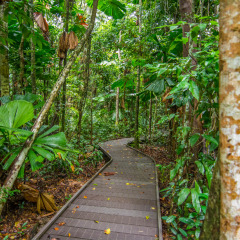 Jindalba Boardwalk | 2 Day 1 Night Daintree Tour
