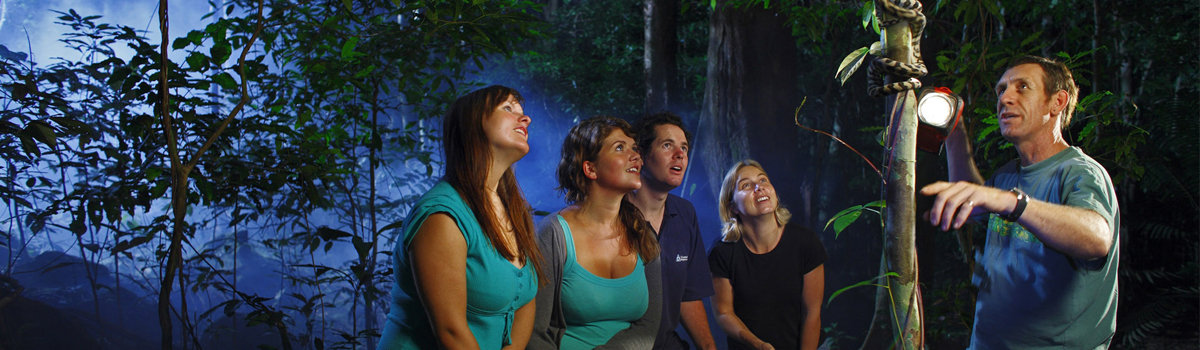 Daintree Rainforest Guided Night Walks - Jungle Adventures