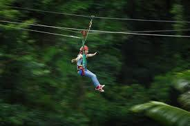 Jungle Surfing Canopy Tour - Zip-Lining Cape Tribulation Daintree Rainforest