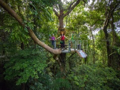 Jungle Surfing Cape Tribulation
