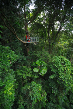 Jungle Surfing family tours