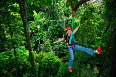 Jungle surfing tours from port douglas
