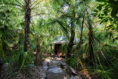 Rainforest Resorts Cairns - Luxury Eco Rainforest Accommodation | Jungle Walk at Thala Beach Lodge