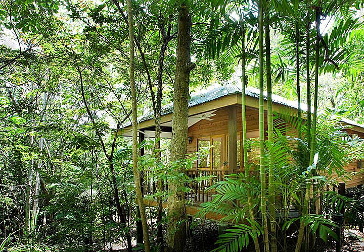 Eco Resorts Far North Queensland - Jungle Walk Rainforest style bungalow accommodation at Thala Beach Lodge