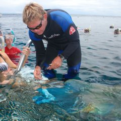 Kids and families can pat friendly Wally the Maori Wrasse