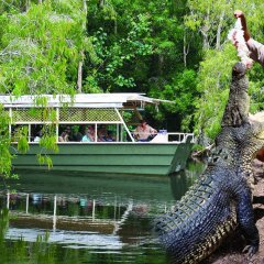 Lagoon Boat Ride amongst Crocodiles