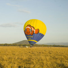 Land on a Cairns farm in a hot air balloon ride