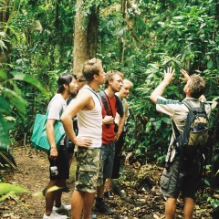 Learn About The Daintree Rainforest | Daintree Rainforest Guided Walk