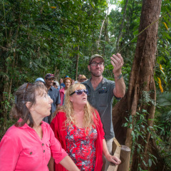 Learn about the Daintree Rainforest from your eco accredited tour guide