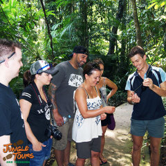 Learn about the rainforest from your naturalist tour guide