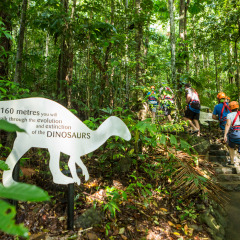Learn About the Rainforest on Daintree Cape Tribulation Ziplining Tour