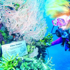 Learn about the Great Barrier Reef whilst scuba diving on the outer Great Barrier Reef in Australia