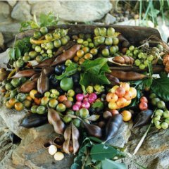 Learn all about Bush Foods on Aboriginal Cultural Park tours in Cairns