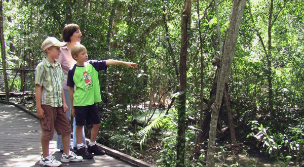 Learn all about nature at Hartleys Crocodile Park