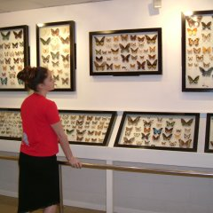 Australian Butterfly Sanctuary In Tropical North Queensland | Rare Butterflies Display