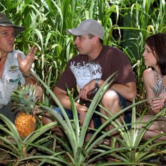 Learn all about Tropical fruits of North Queensland Australia