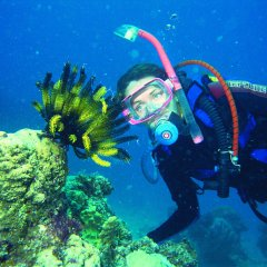 Learn to dive in Cairns Queensland Australia