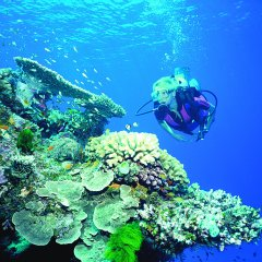 Learn to PADI dive on Australia's Great Barrier Reef