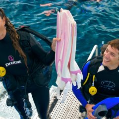Learn to scuba dive and snorkel on the Great Barrier Reef from Port Douglas