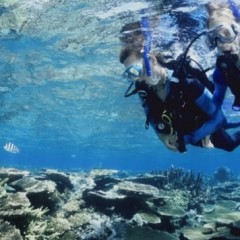 Learn To Scuba Dive On The Great Barrier Reef From The Newest Boat | Cairns Liveaboard Dive Trips
